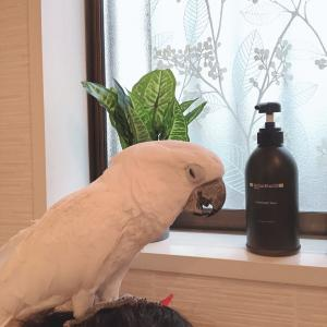 仁ちゃんとお風呂に入りましょう!+朝の風景