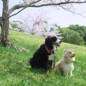 桜舞う夢見が丘で会おう