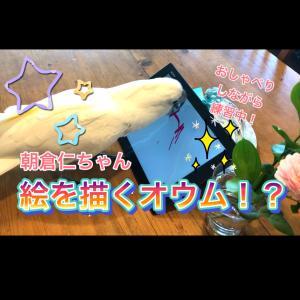 タイハクオウムの朝倉仁ちゃん、お絵かきの練習動画!