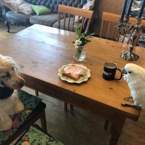 仁ちゃんとリズちゃんとご飯を食べよう!
