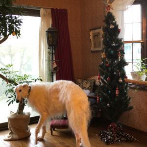 クリスマスツリーとボルゾイ!可愛すぎる寝姿❤️