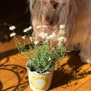 お花とプリンセス
