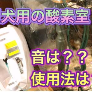 大型犬用酸素室の使用感と騒音を動画で(動画)