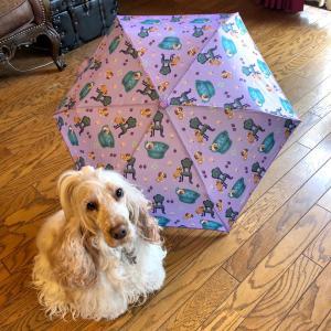 おしゅてきお買い物!リズちゃんの傘&食いしん坊仁ちゃん