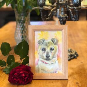 18歳の雑種犬、ちなつちゃんの肖像画(絵画、似顔絵、水彩画)