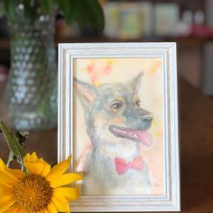 雑種犬の鼓舞君です(ペットの似顔絵、水彩画、絵画)