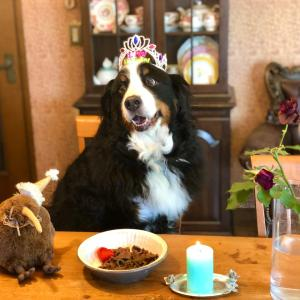 アルバート君10歳の誕生日おめでとう!!!