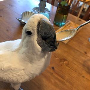 仁ちゃんのあったか飯&鳥に安全なフライパン