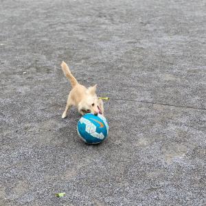 雨が降る前にボール遊び