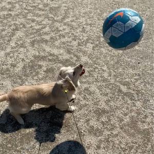 今日は朝にボール遊び