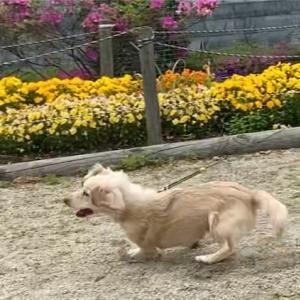 花が咲く公園で走る