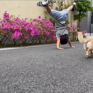 今日のお散歩、犬、花、側転