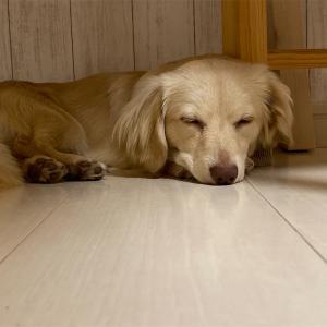 眠い眠い、おやすみなさい