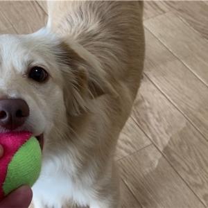 部屋でボール遊び