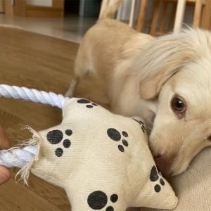 ダイソーで買った犬のおもちゃはお気に入り!でも。。