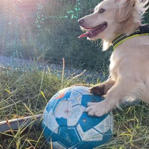 ボール遊び大好き、そして新しいロープ