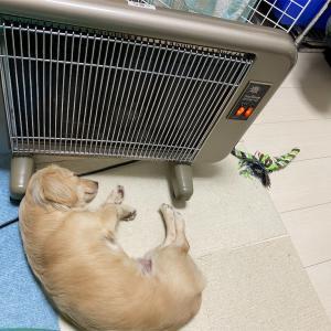 緊急事態でも犬は平和だ