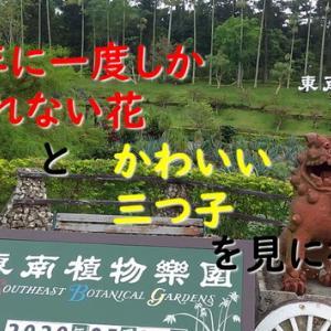 今しか見られない「珍しい花」と「かわいい赤ちゃん」に癒されに東南植物楽園へ行こう