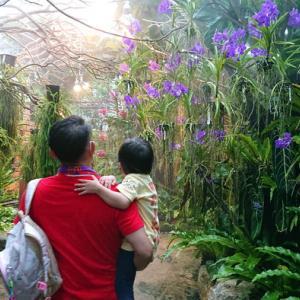 沖縄の「熱帯ドリームセンター」は雨でも子どもが楽しめる植物園