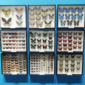 名古屋市科学館の「特別展(昆虫)」へ行ってみました