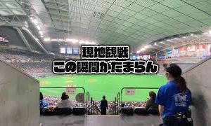【札幌ドーム】今年初の現地観戦!ドームに入るあの瞬間がたまらん!ある意味ガチャ動画になってますw
