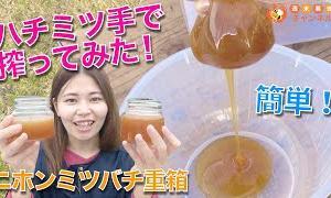 ハチミツの搾り方【ニホンミツバチの巣を手で搾ってみた!】