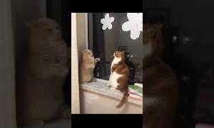 【奇跡の一瞬!】猫パンチの応酬が、徐々に平和になってゆく瞬間ww!【面白い犬ネコ】