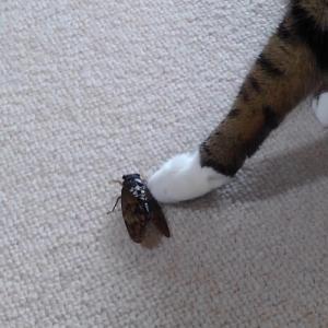 たび、猫生初めての蝉