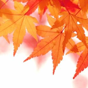 【秋はリフォームのチャンス!】その理由を解説します。
