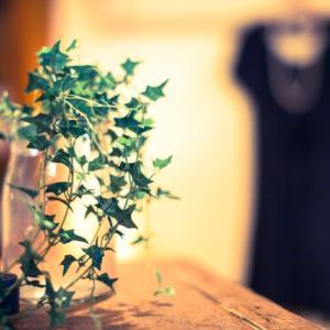 【冬こそグリーンでリラックス!】寒さに強い観葉植物5選♪
