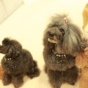 愛犬と共に。子犬のしつけ教室【犬のようちえん 茅ヶ崎】