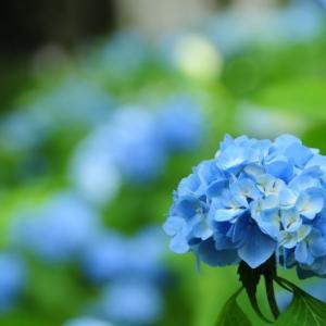 いきなりの青空がなんだか悲しかった日