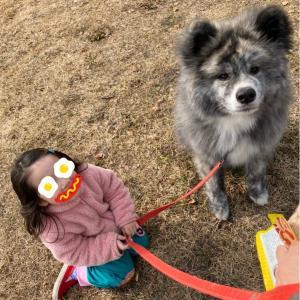 犬満載🐕🐕🐕に癒されて