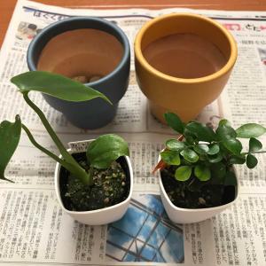 観葉植物と実家