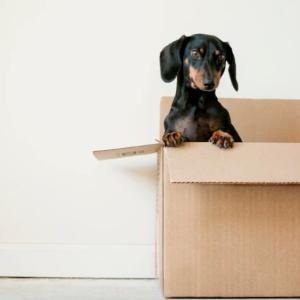 建売新築一戸建てを購入すると、いつから引っ越しできるの?