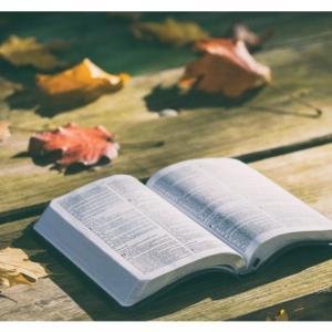 読書の秋。など。