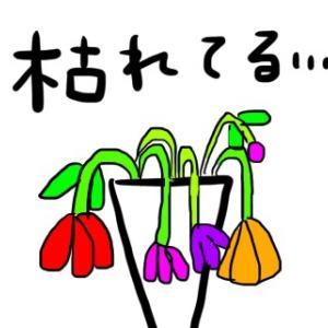 としちゃん流植物の復活法。