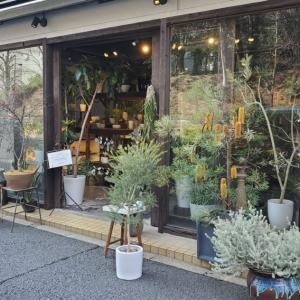 【代々木周辺】散歩しながら回りたい!素敵な観葉植物店5選