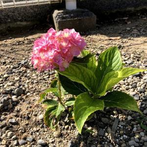 小さな花に小さな幸せを感じる|かんどり本山総持寺