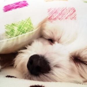 いい昼寝は『頭すっきり!』午後が快調になる方法