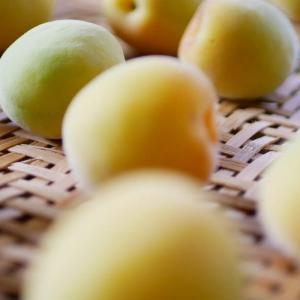 昔ながらの『酸っぱい梅干し』梅と塩だけで手作りする方法