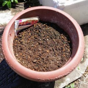 花の種が発芽しましぇ~ん!トイレットペーパーを使って種まきしたら、すぐに芽が出て驚き桃の木山椒の木!
