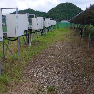 3か月後の除草剤の効果確認in京丹波