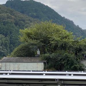 第二発電所:木を切るとどうなる?5