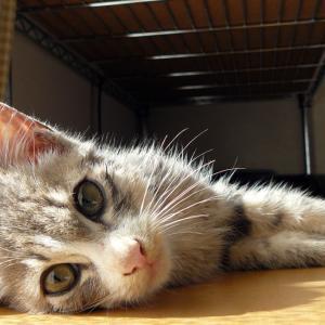 MACOパパと保護猫くんの想い出  ⸜( ´ ꒳ ` )⸝♡︎ 動画もあるよ!