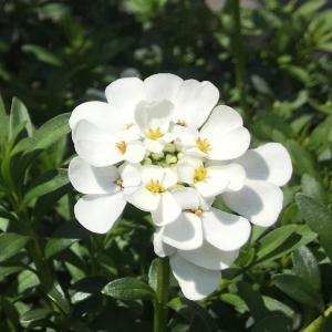 お庭はお花でいっぱい (ღˇᴗˇ)。o♡