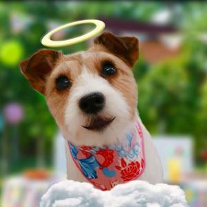 愛犬に童謡の「おもちゃのマーチ」を歌ってもらったら、途中から壊れ気味の動きになった動画。