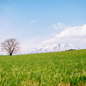 東北に春はいつ訪れる?「600°Cの法則」と`'風の時代`'に。