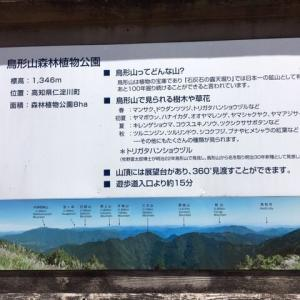 鳥形山森林植物公園の苔