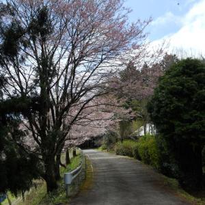 愛媛県で遭遇した多肉と苔